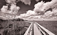 Boardwalk into the grasslands
