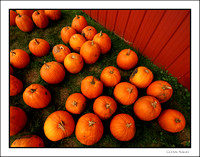 Pumpkins by barn