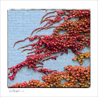 Autumn leaves on brick wall