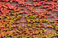 Autumn leaves on red brick wall