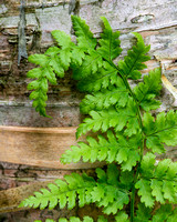 Fern on bark