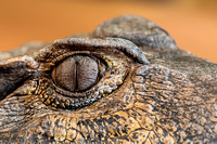 Smooth-fronted caiman eye
