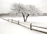 Cherry Hills snow fall