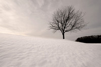 Tree on hill of snow