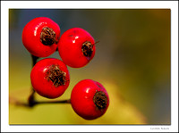 Four berries