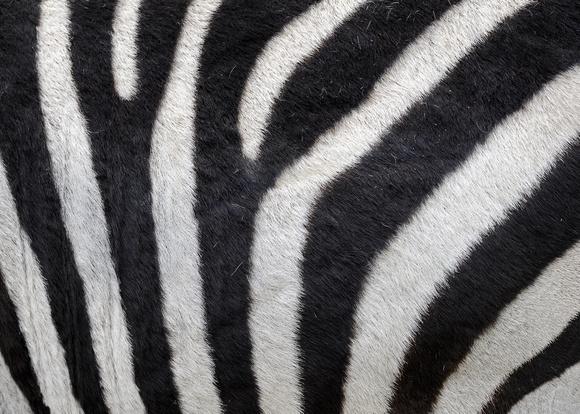 Glenn Nagel Photography   Animal Patterns