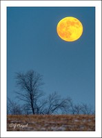 Moon rising over field