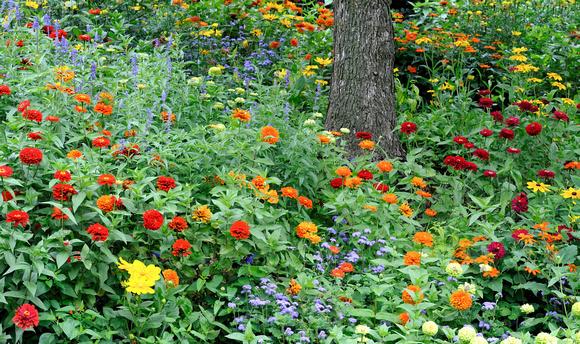 Glenn nagel photography chicago botanic garden multi for How to make multi colored flowers